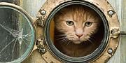 cat-porthole
